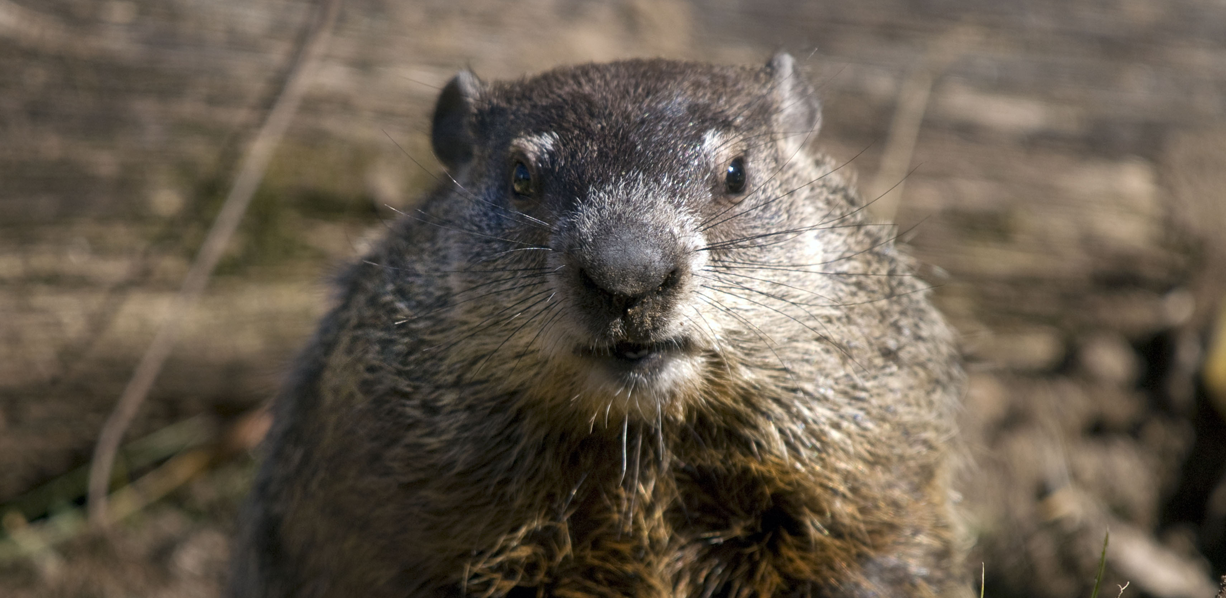 retagreting-groundhog-blog-roll